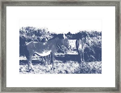 Zebra 4 Framed Print by Joe Hamilton