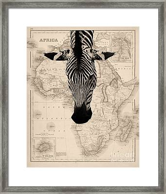 Zebra And Africa Map Framed Print by Delphimages Photo Creations