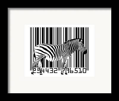 Zebra Framed Prints