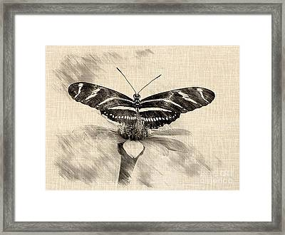 Zebra Butterfly Sketch Framed Print