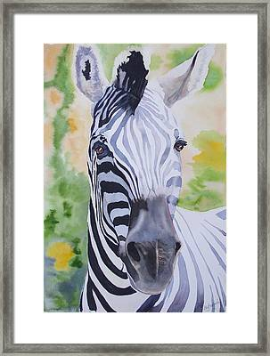 Zebra Crossing Framed Print by Ally Benbrook