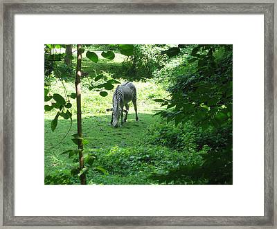 Zebra Crossing Framed Print by Eliot LeBow
