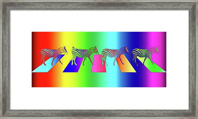 Zebra Crossing Pop Art Framed Print by Gill Billington