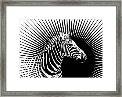 Zebra Dawn Framed Print by Michael Durst