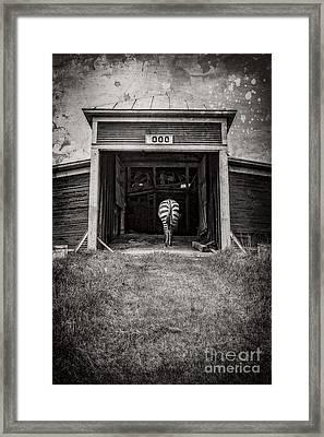 Zebra Framed Print by Edward Fielding