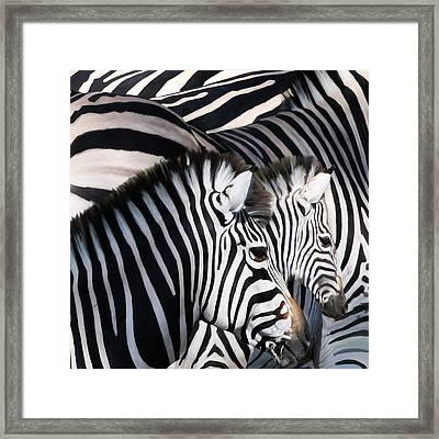 Zebra Family Framed Print by Johnnie Boswell