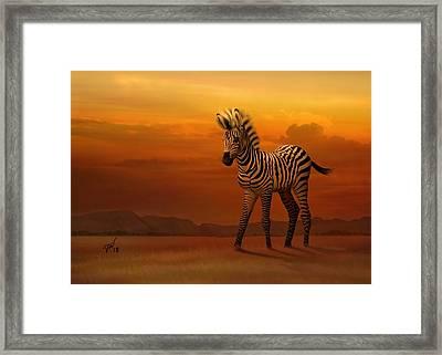 Zebra Fawn  Framed Print