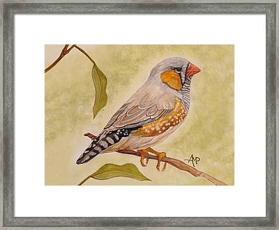 Zebra Finch Watercolor Framed Print by Angeles M Pomata