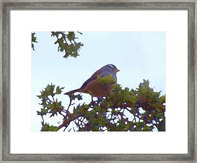 Framed Print featuring the digital art White Crowned Sparrow In Cedar by Shelli Fitzpatrick