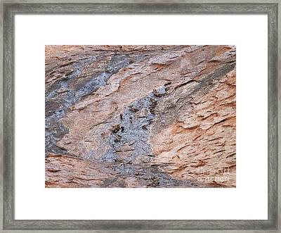 Zebra Finches At Uluru Waterhole Framed Print by Phil Banks