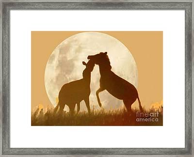 Zebra Full Moon Silhouettes  Framed Print