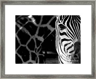Zebra G Framed Print by Tonya Laker