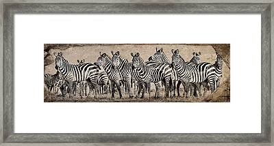 Framed Print featuring the photograph Zebra Herd Rock Texture Blend Wide by Mike Gaudaur