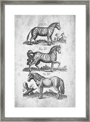 Zebra Historiae Naturalis 1657 Framed Print
