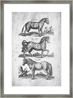 Zebra Historiae Naturalis 1657 Framed Print by Aged Pixel