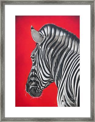 zebra in African sun Framed Print by Ilse Kleyn
