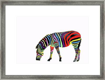 Framed Print featuring the photograph Zebra In My Dreams by Bonnie Barry