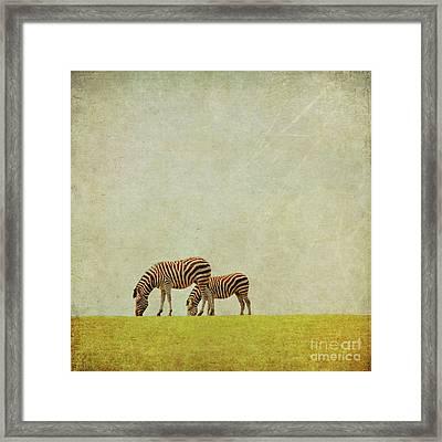 Zebra Framed Print by Lyn Randle