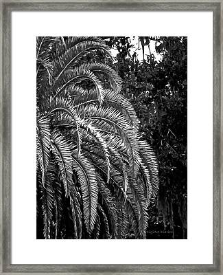 Framed Print featuring the photograph Zebra Palm by DigiArt Diaries by Vicky B Fuller