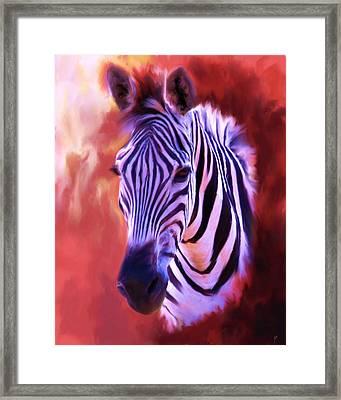 Zebra Portrait Framed Print