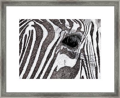 Zebra Portrait Framed Print by Karl Addison