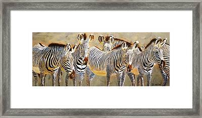 Zebra Herd Framed Print