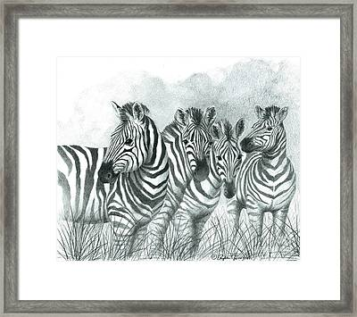 Framed Print featuring the drawing Zebra Quartet by Phyllis Howard