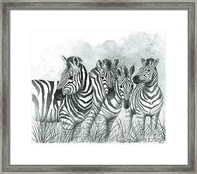 Zebra Quartet Framed Print