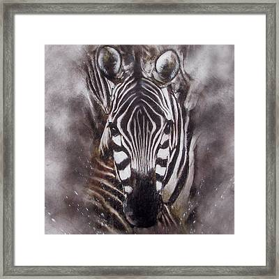 Zebra Splash Framed Print
