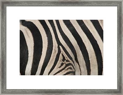 Zebra Stripes Framed Print