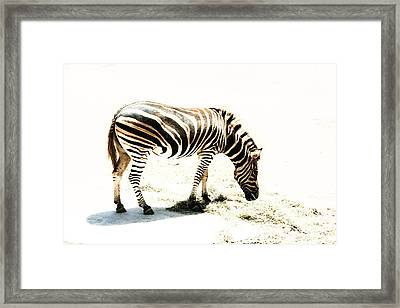 Framed Print featuring the photograph Zebra Stripes by Stephen Mitchell