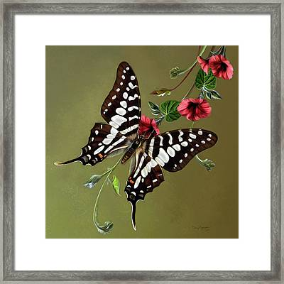 Zebra Swallowtail Butterfly Framed Print by Thanh Thuy Nguyen