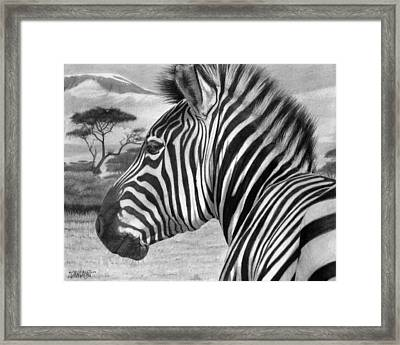 Zebra Framed Print by Tim Dangaran