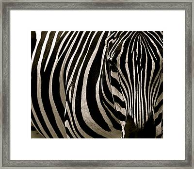 Zebra Up Close Framed Print