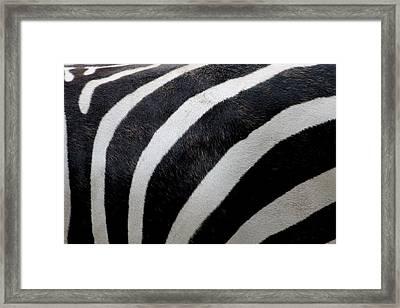 Zebra Wall Design 5 Framed Print