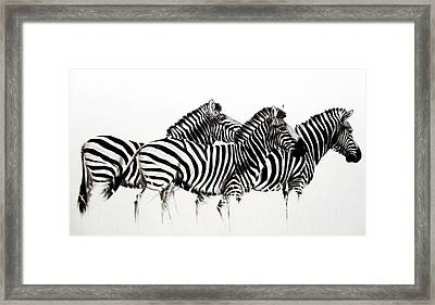Zebras - Black And White Framed Print