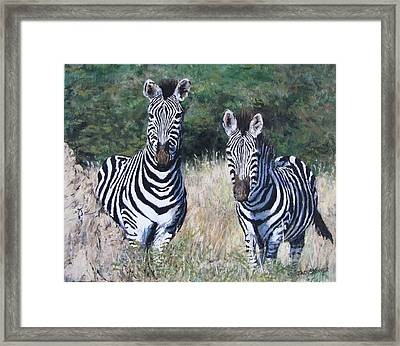 Zebras In South Africa Framed Print