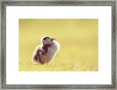 Zen Bird - Gosling Enjoying The Sun Light Framed Print by Roeselien Raimond