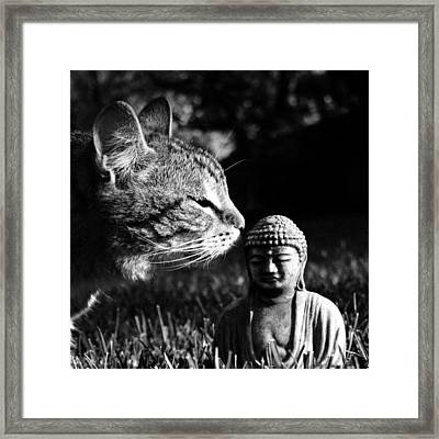 Zen Cat Black And White- Photography By Linda Woods Framed Print