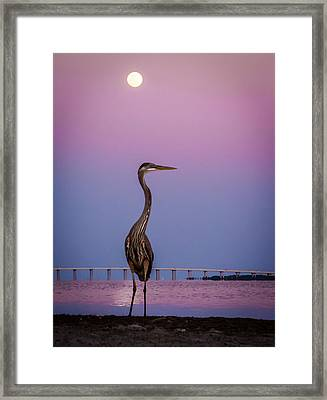 Zen Framed Print by David Kulp