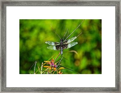Zen Dragonfly 2 Framed Print