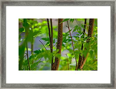 Zen Forest Framed Print by Az Jackson