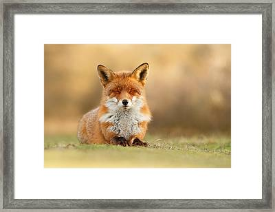 Zen Fox 3.0 Framed Print by Roeselien Raimond