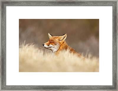 Zen Fox 4.0 Framed Print by Roeselien Raimond