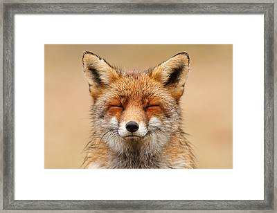 Zen Fox Red Fox Portrait Framed Print by Roeselien Raimond