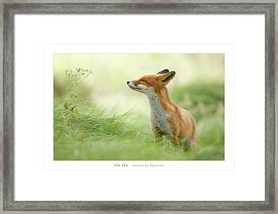 Zen Fox Roeselien Raimond Framed Print by Roeselien Raimond