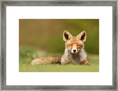 Zen Fox Series - Born To Be Happy Framed Print by Roeselien Raimond