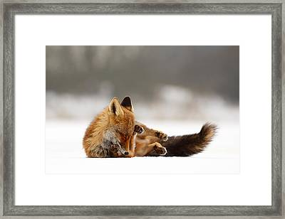 Zen Fox Series - Comfortably Fox Framed Print by Roeselien Raimond