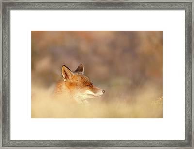 Zen Fox Series - Dream Fox Framed Print