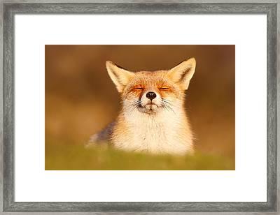 Zen Fox Series - Happy Fox Is Happy II Framed Print by Roeselien Raimond